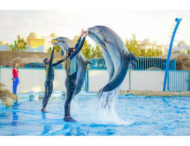 Экскурсия в Дельфинарий